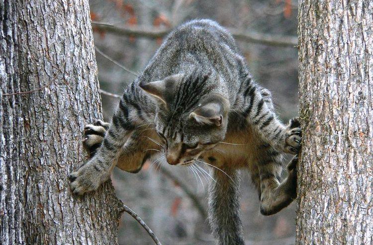 Кот между деревьями