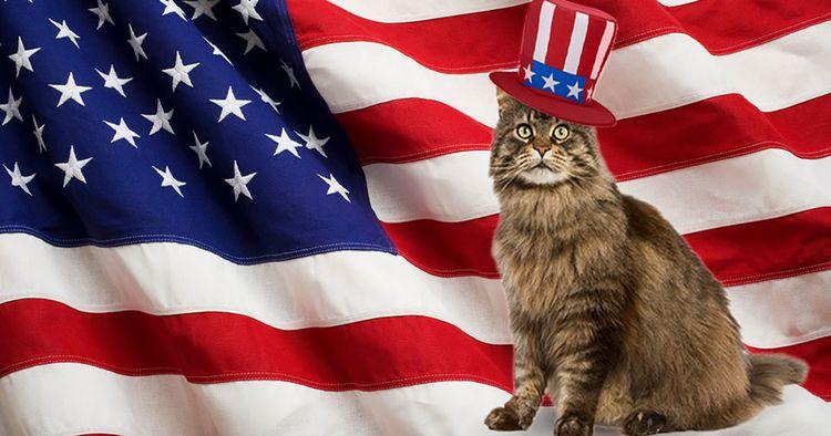 Кот на фоне американского флага