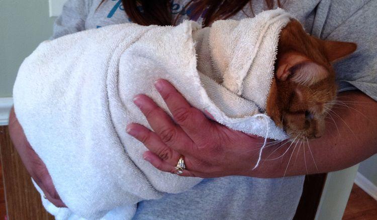 Завернутый в полотенце кот