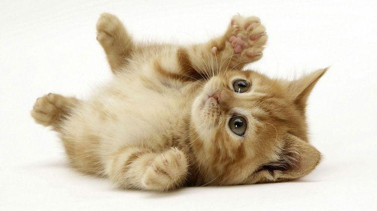 Рыжий котенок лежит