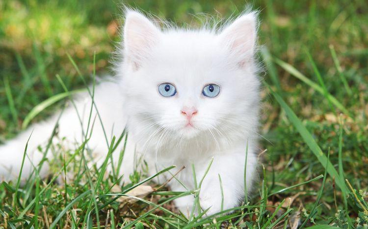 Белый котенок в траве