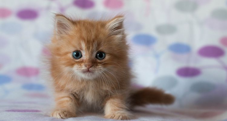 Красивый рыжий котенок