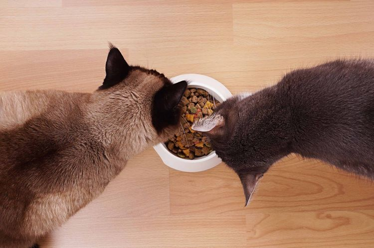 Кошки едят сухой корм