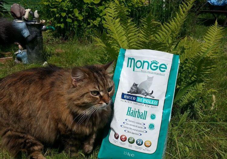 Кот и корм Monge