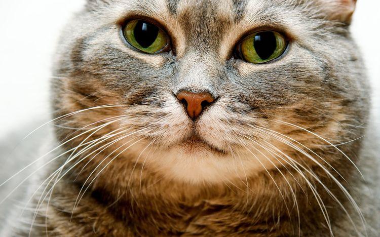 Кот с красивыми усами