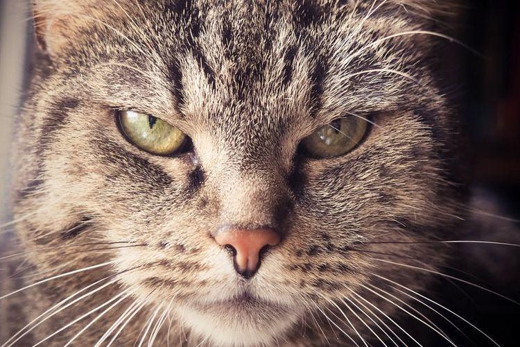 Кот с длинными усами