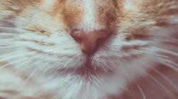 Температура у кота что делать в домашних условиях
