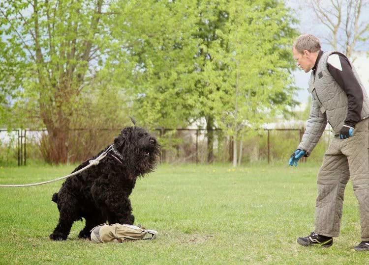 Собака сталина дрессировка