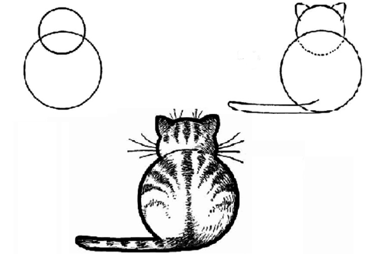 Рисунок кошки из окружностей