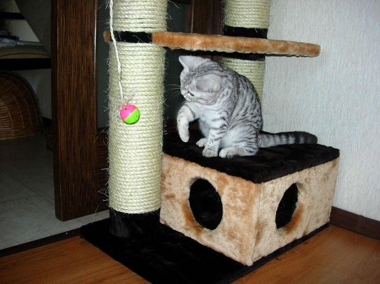 Котенок играет на домике