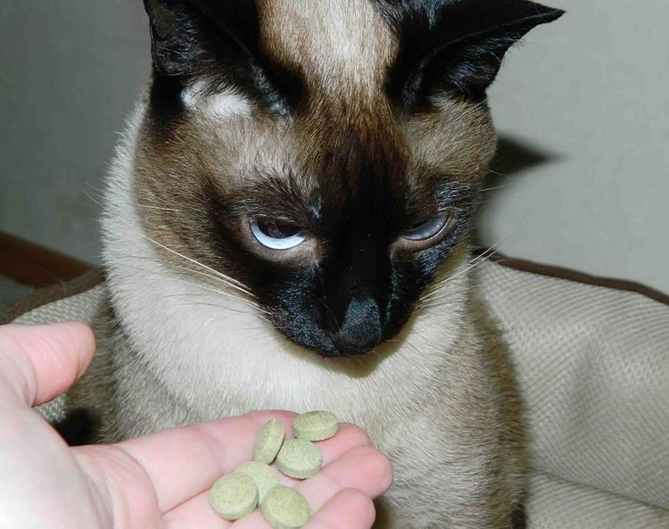 Кошка не ест лекарства