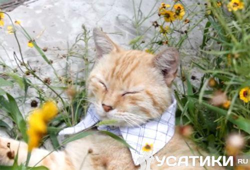 Кот в ошейнике-воротнике
