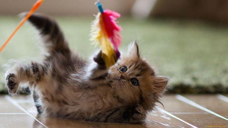 Котенок играет с пером
