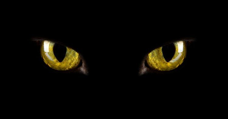 Animal eyes at night color