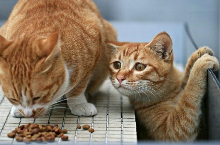 Котенок наблюдает за котом