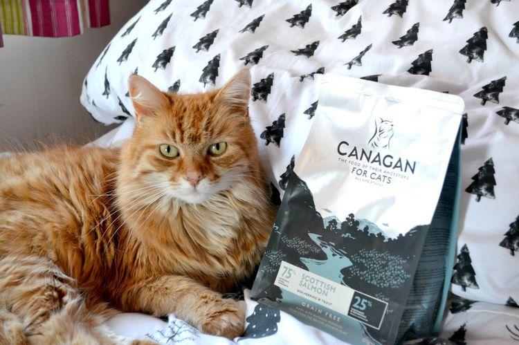 Кот рядом с пачкой корма Canagan