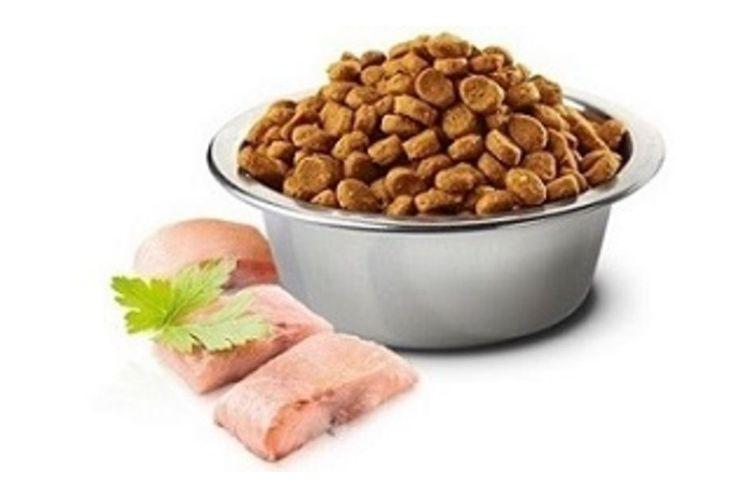 Сухой корм для собак с рыбой