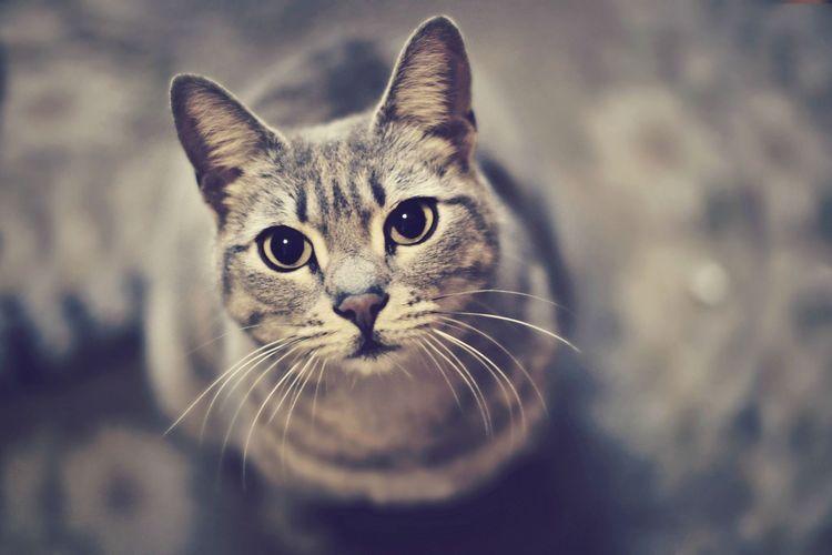 Кот просит еду