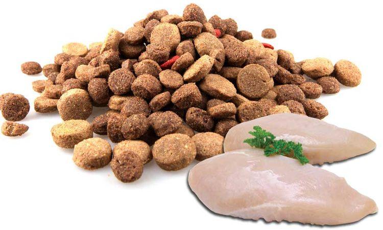 Курица и сухой корм для собак