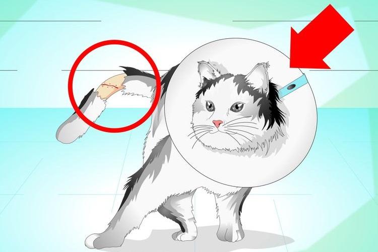 Картинка кошки с поломанным хвостом