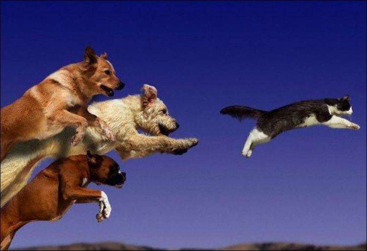 Собаки гонятся за котом