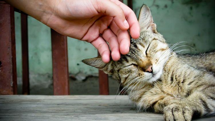 Кошку гладят