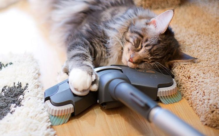 Домашний кот спит на пылесосе