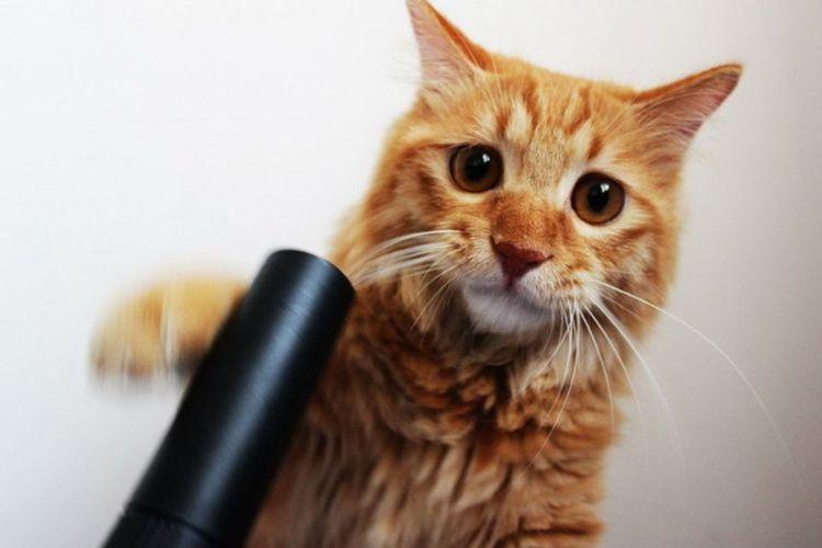 Рыжий кот атакует пылесос