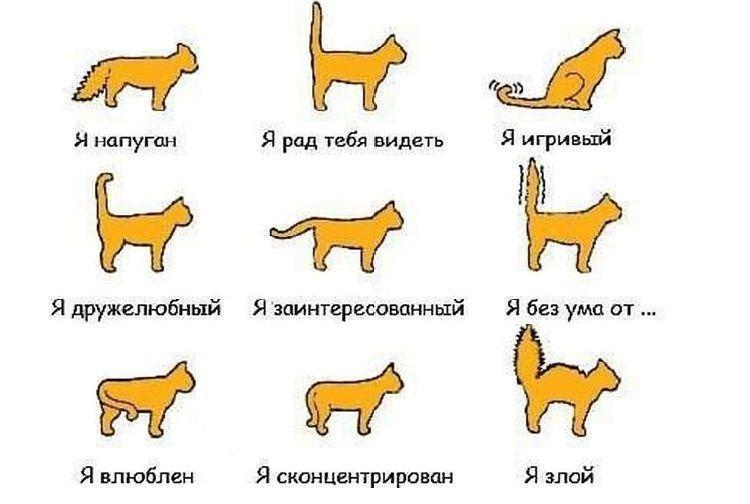 Настроение кошки в зависимости от положения хвоста
