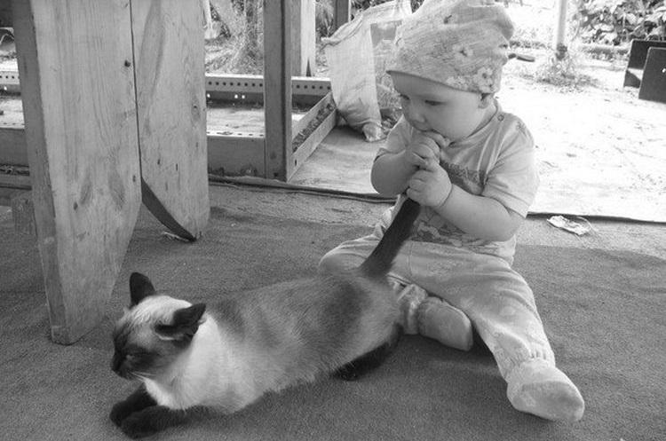 Ребенок тащит хвост кота в рот
