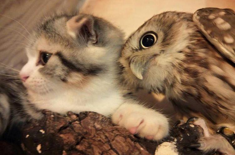 Сова и котенок