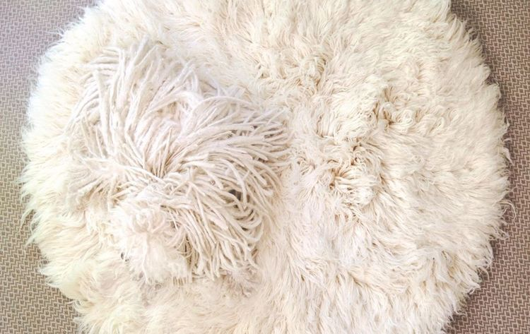 Косматая собака на ковре
