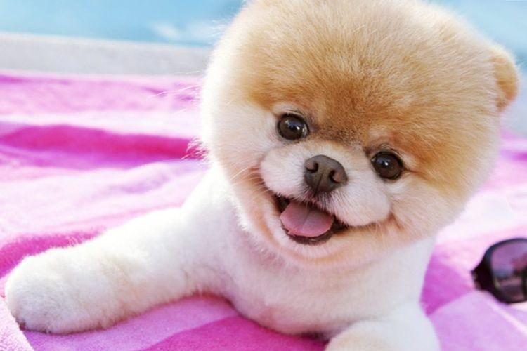 Собака на розовом покрывале