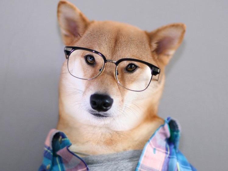 Пес в очках и рубашке