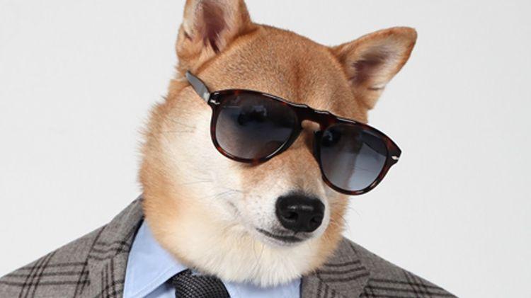 Пес в солнечных очках