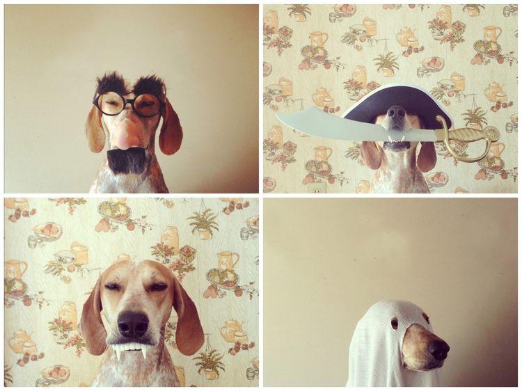 Несколько смешных фото собаки