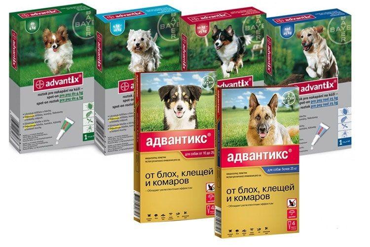 Ассортимент Адвантикса для собак