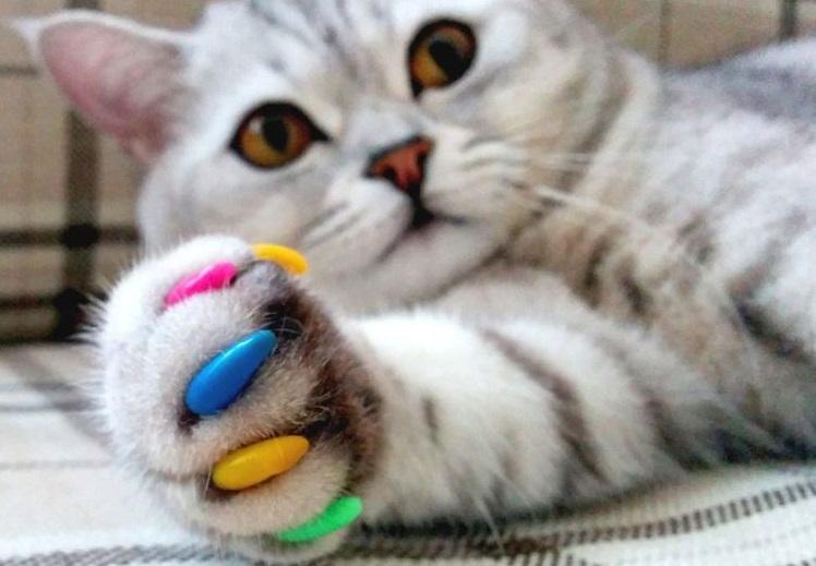 Полосатый кот с цветными когтями