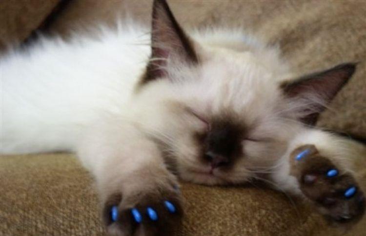 Маленький котенок спит