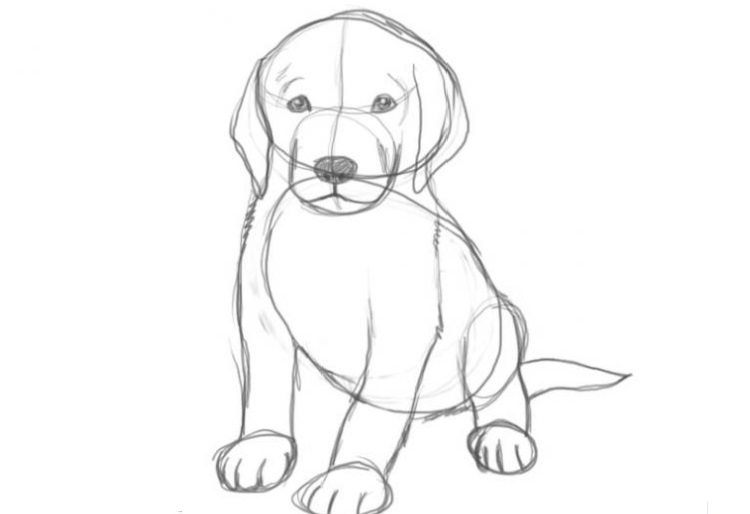 Рисунок собаки карандашом