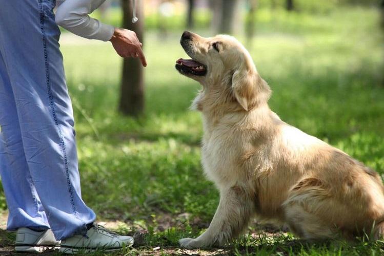 Хозяин дает команду собаке