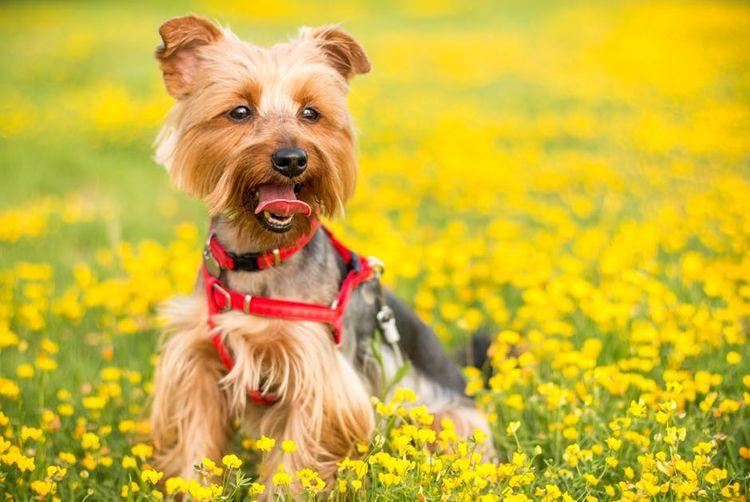 Собака на цветочном поле