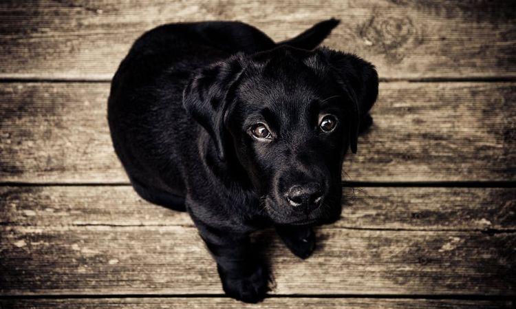 Черный щенок сидит