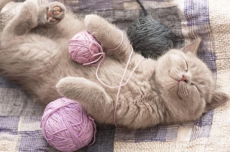 Улыбающийся котенок с клубками шерсти