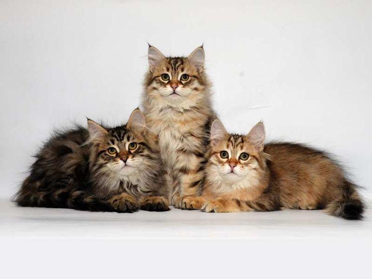 Симпатичные котята