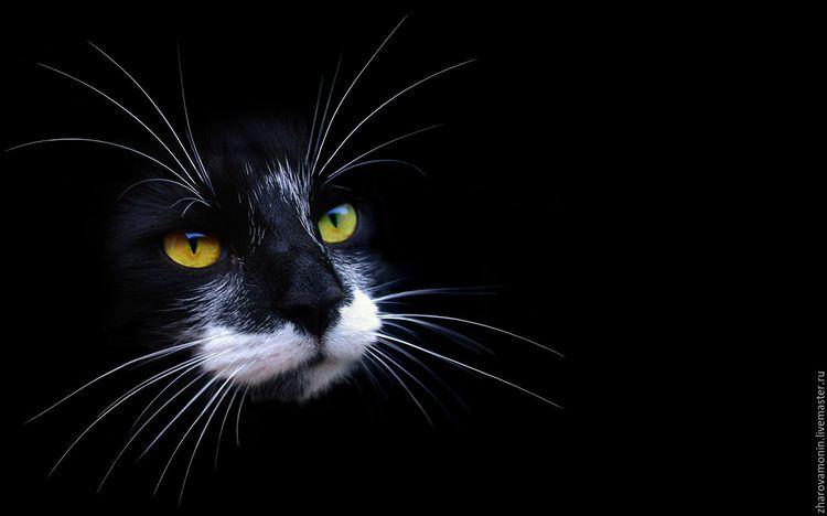 Черный кот в темноте
