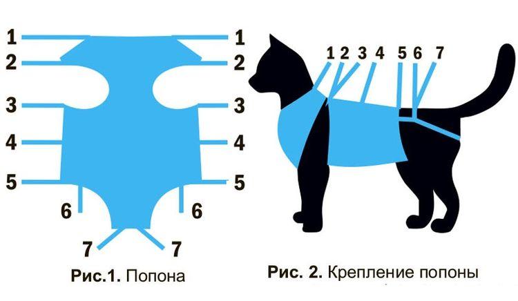 Как одеть попону на кошку