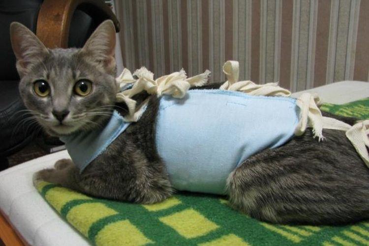 Кошка в попоне сидит на одеяле