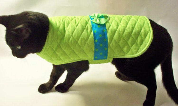Черная кошка в зеленой попоне