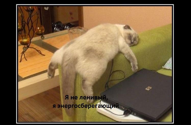 Кот спит на спинке кресла